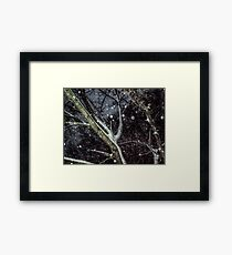 Trees In The SnowStorm Framed Print