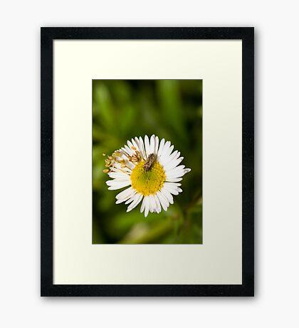 Bug on Flower Framed Print