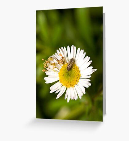 Bug on Flower Greeting Card