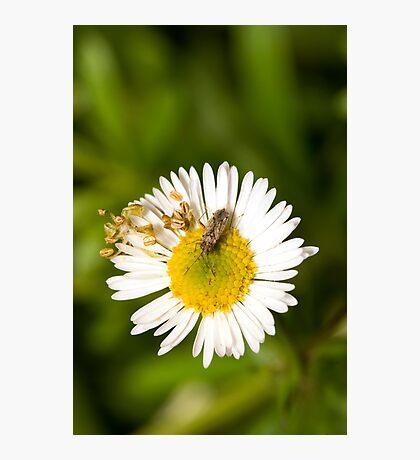 Bug on Flower Photographic Print