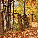 Autumn 6 by Dominika Aniola