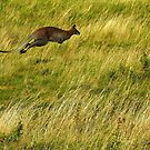 A Great Leap by Barnbk02