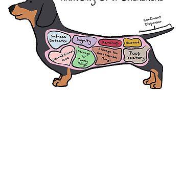 Anatomy of a Dachshund by MommySketchpad