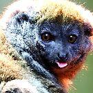 Lemur Raspberries by Barnbk02