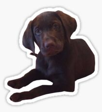 Marty the chocolate lab Sticker
