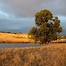Tree in golden light by VisualFX