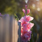 Pink Gladiolus by Rachael Martin