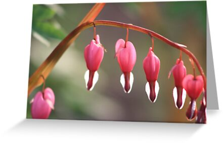 Bleeding Hearts by gingerfox13