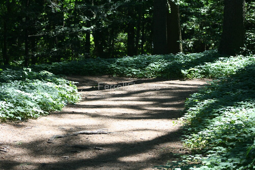 The Path by FerrellCharles