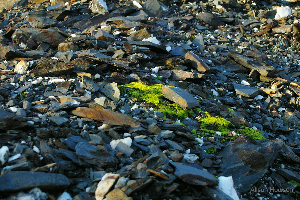 Shale and Moss by Alison Howson