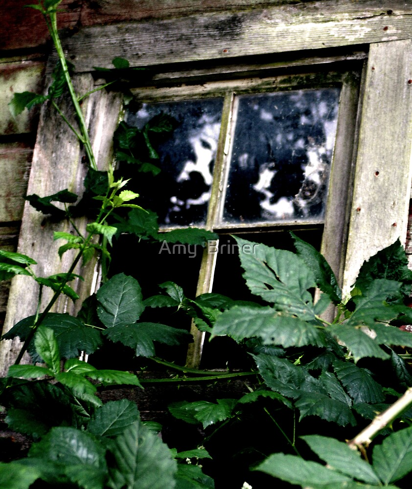 Overgrown Window by Amy  Briner