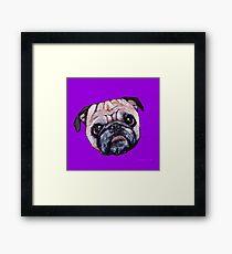 Butch the Pug - Purple Framed Print