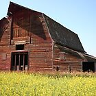 Prairie shed by zumi