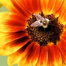 Sunflower and Friend by shutterbug2010