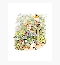 Peter Rabbit Steals Carrots Photographic Print
