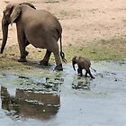 WHEE ARE WE GOING MOM - THE AFRICAN ELEPHANT – Loxodonta Africana by Magriet Meintjes