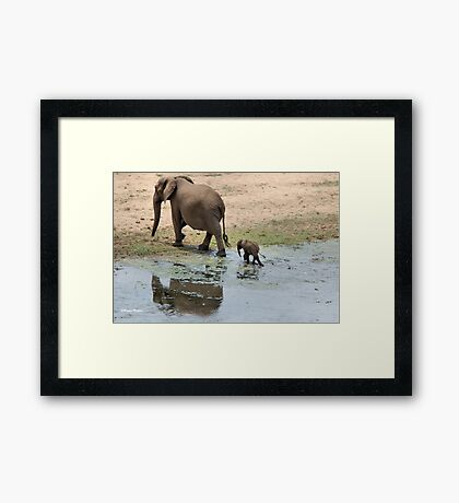 WHEE ARE WE GOING MOM - THE AFRICAN ELEPHANT – Loxodonta Africana Framed Print