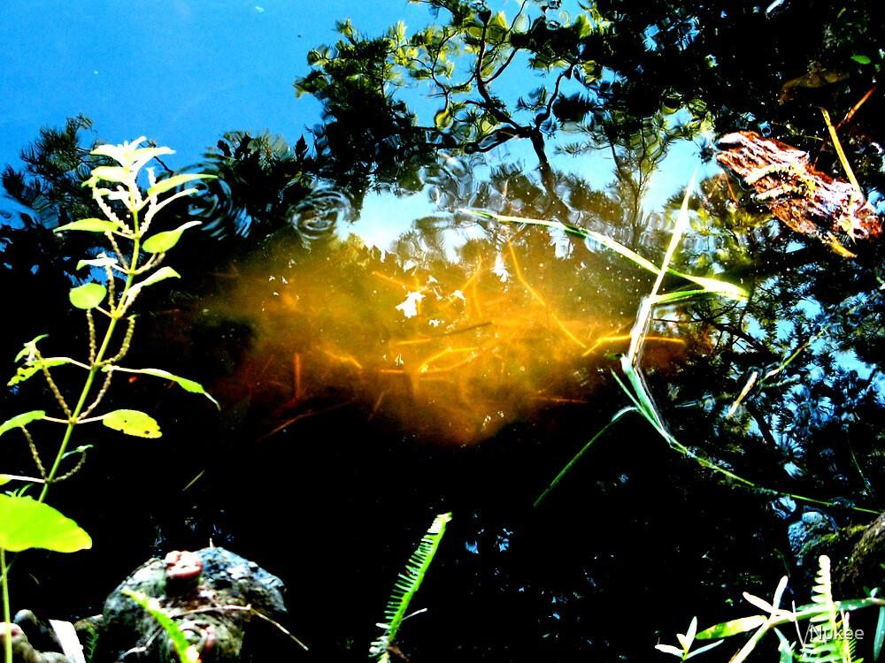 Sunny Reflections by Nukee