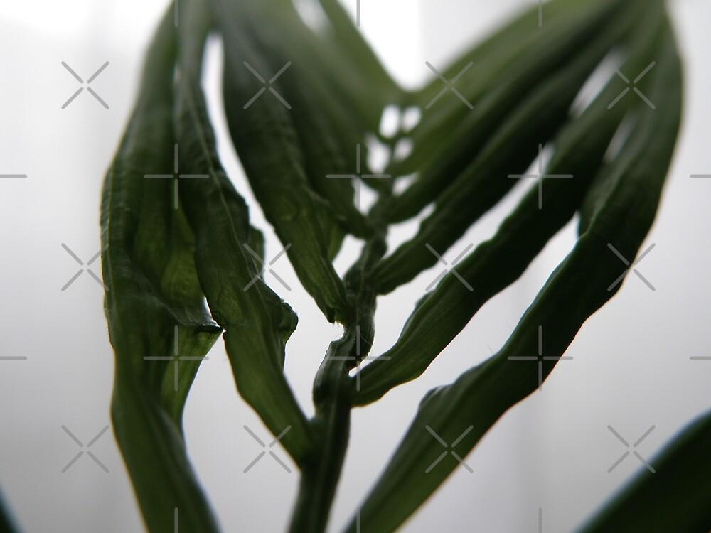 Parlour Palm love by CapturedByKylie