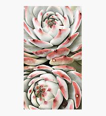 Succulent Photographic Print