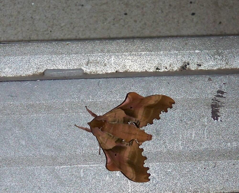 camo moth by ieasha98