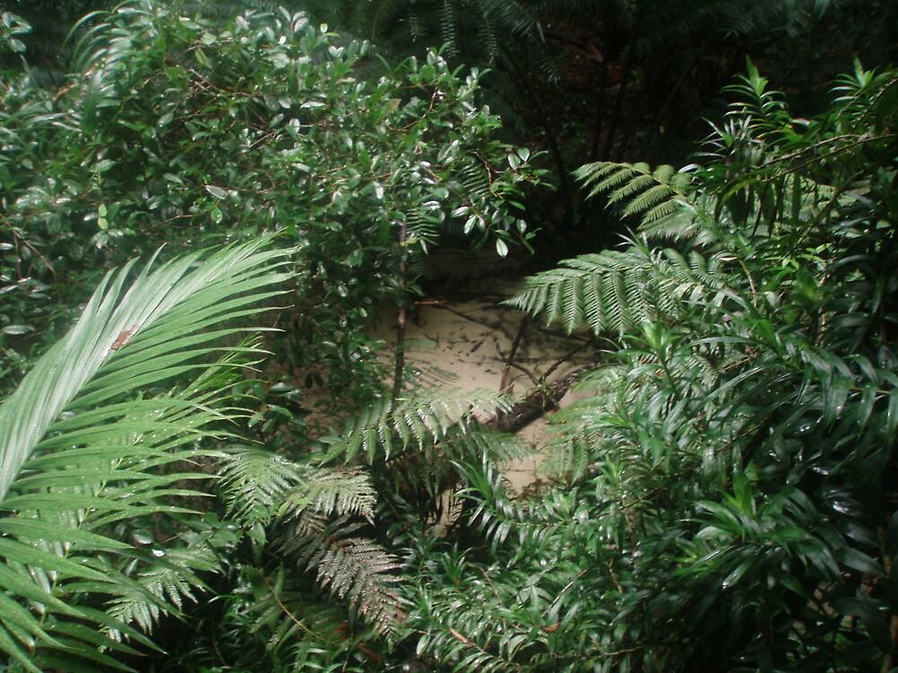 Ferns by samaus
