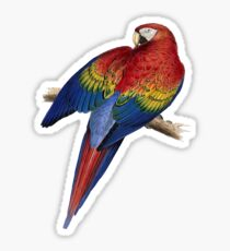Illustration of A Scarlet Macaw Vector Sticker