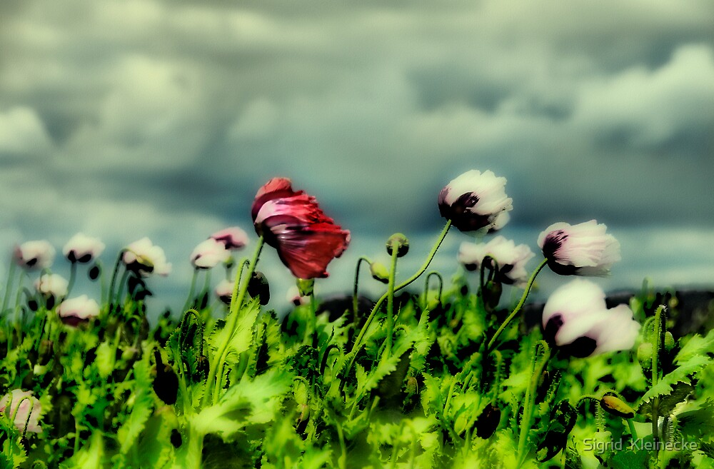 Blowin' in the wind by Sigrid  Kleinecke