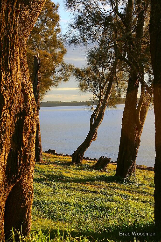 Tidal Timbers. by Brad Woodman