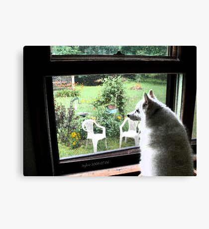 Sylvie at the Kitchen Window | I'm home girl!! Canvas Print