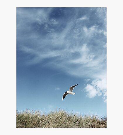 Beach Bird Photographic Print