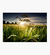 Green Isle Sunset Photographic Print