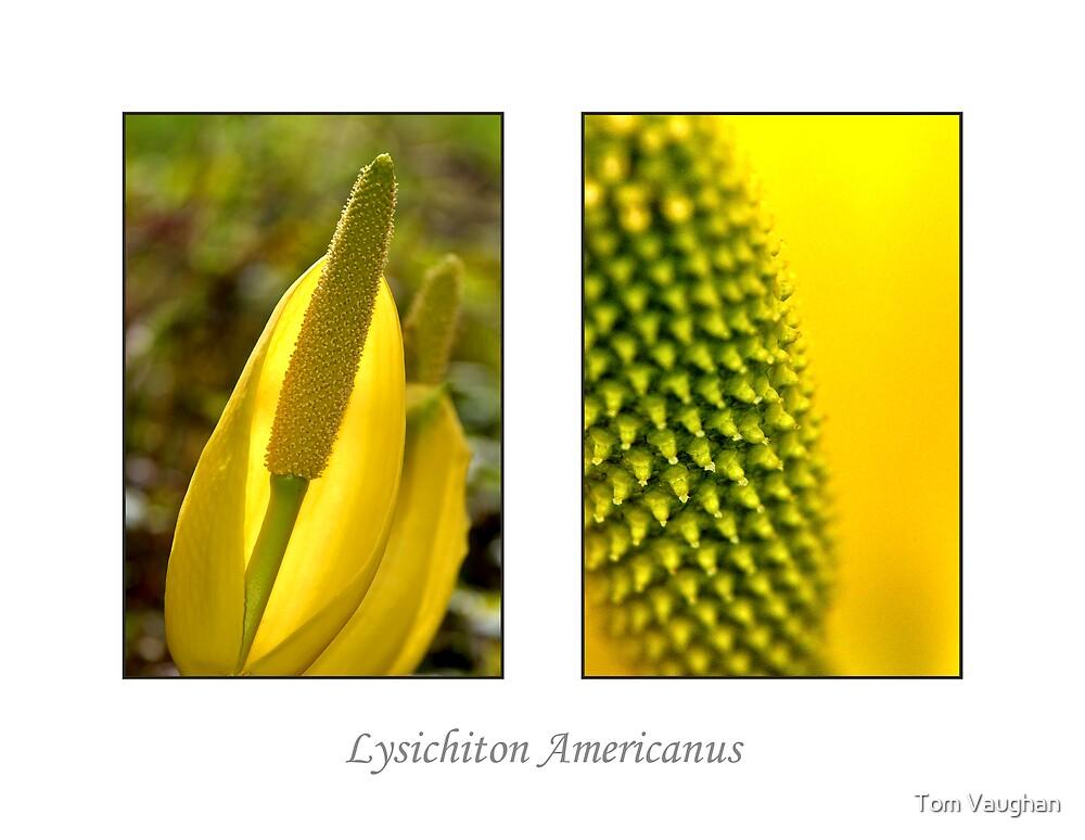 Lysichiton Americanus by Tom Vaughan