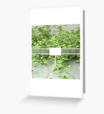 Ivy 2 Greeting Card