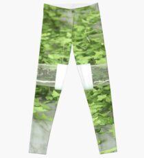 Ivy 2 Leggings