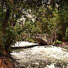 Bridge and Pathways in Yosemite National Park by HeavenOnEarth