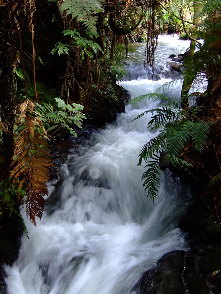 Kiwi Stream by Jez1