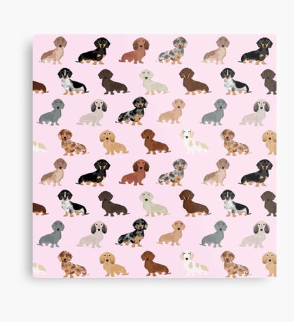 Dachshund dog breed pet pattern pet portrait doxie gifts Metal Print