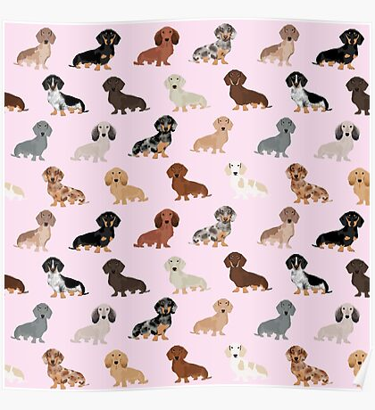 Dachshund dog breed pet pattern pet portrait doxie gifts Poster