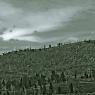 Yellowstone in Black and White #7 by veronicalynne