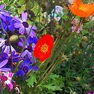 Poppies by shortarcasart