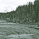Yellowstone in Black and White #14 by veronicalynne
