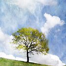 Tree in Spring by Kasia-D
