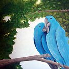 Macaws in Love by Linda Ursin