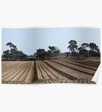 Tree Lined Straight Ploughed Field Poster