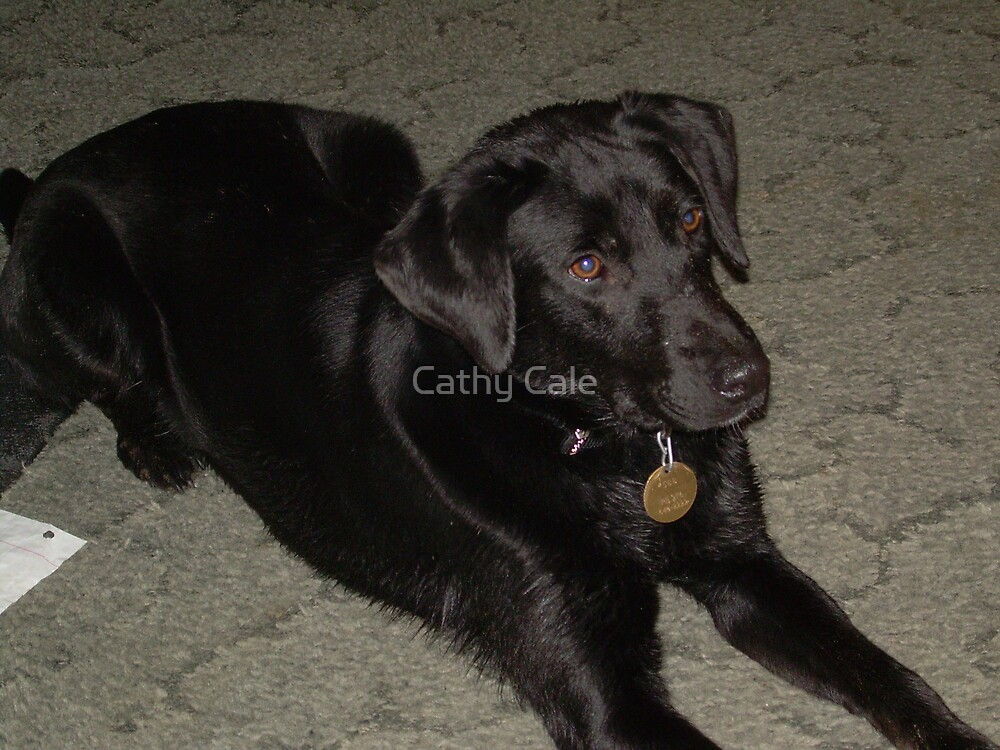 Bailee- Labrador Retriever by Cathy Cale