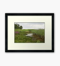 shore overgrown with reeds Framed Print