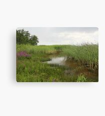 shore overgrown with reeds Canvas Print
