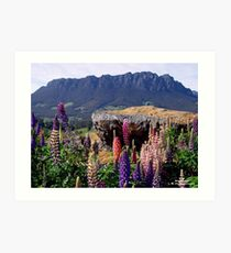 photoj Tasmania Mt Roland Art Print