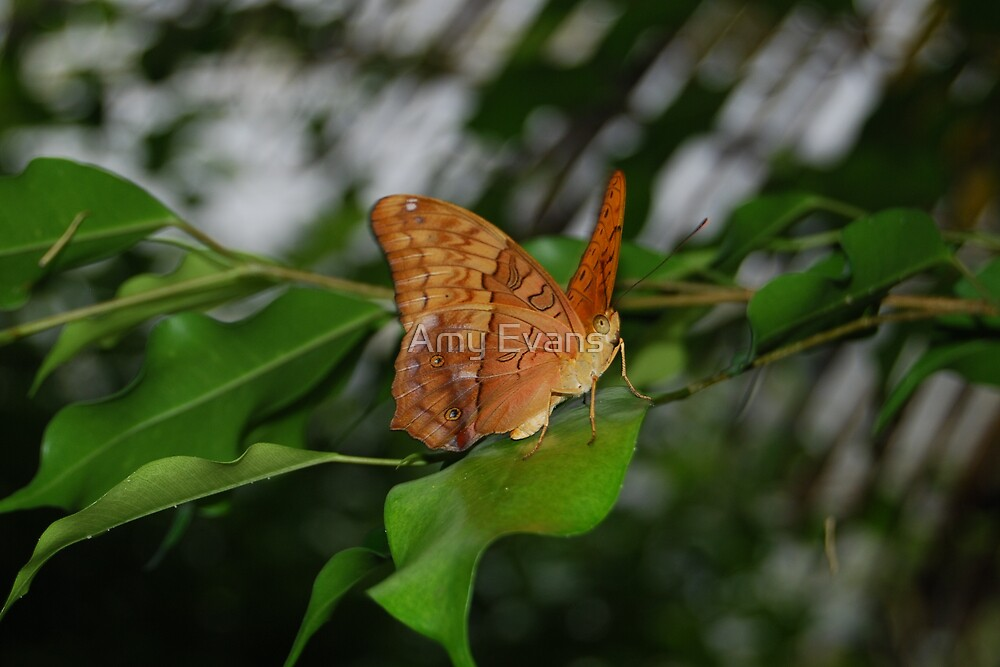 Pretty as a butterfly by Amy Evans